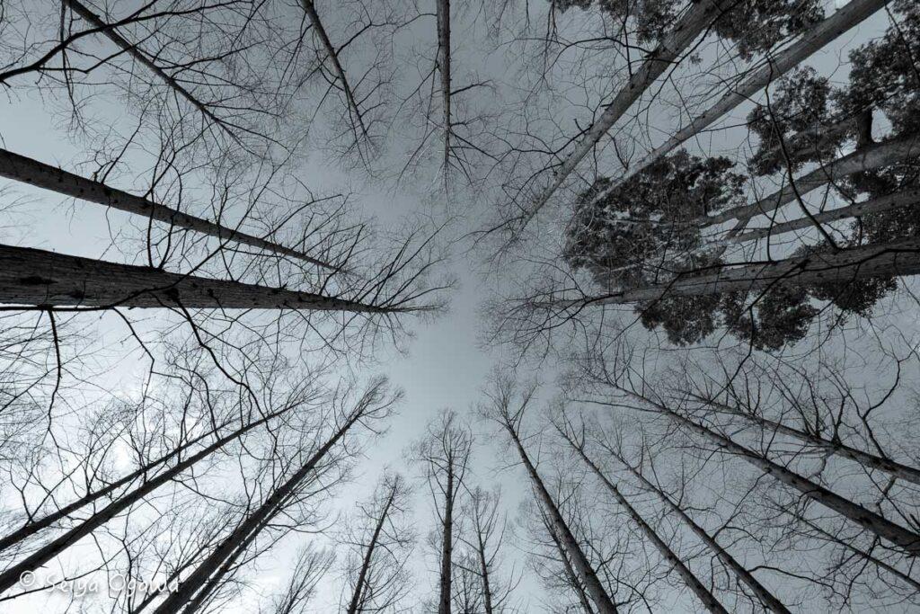 空に向かう木